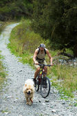 Mountain biker and dog on old rural road — 图库照片