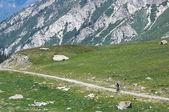 Biker on high mountain rural road — Stock Photo