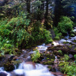 Small creek — Stock Photo #3194169
