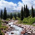 Summer mountain valley — Stock Photo #3195163