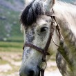Stock Photo: Portrait gray horse