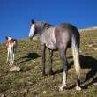 Horse and foal — Stock Photo