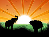 Landscape with sun and elephants — Stock Photo