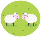 Two white sheep — Stock Vector