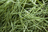 Faded grass — Stock Photo