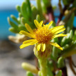 Stock Photo: Small yellow flower