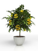 Money tree in flowerpot isolated — Stock Photo