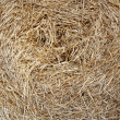 Hay — Stock Photo #2873546