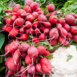 Stock Photo: Red Radishes