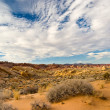 Desert Tranquility — Stock Photo