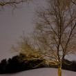 Light Post behind the Tree, Winter Scene — Stock Photo