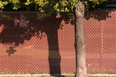 Red Fence behind a Tree — Stock Photo