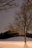 Poste de luz atrás da árvore, a cena de inverno — Foto Stock