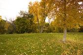 árboles en otoño — Foto de Stock