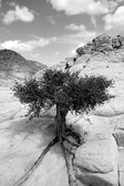 Zblízka na skalách se stromem — Stock fotografie