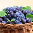 Freshly picked damson plums - Stock Photo