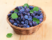 Freshly picked damson plums — Stock Photo
