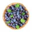 Stock Photo: Freshly picked damson plums