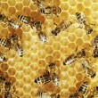 Stock Photo: Honeybees on comb