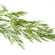 Royalty-Free Stock Photo: Dill weed