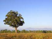 Early morning in udawalawe national park — Stock Photo