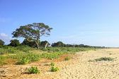 Yala landscape 2 — Stock Photo