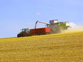 Wolds harvesting — Stock Photo