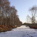 bois de bouleaux d'hiver — Photo