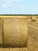Round bales in summer — Stock Photo
