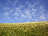 Dry autumn grasses 2 — Stock Photo