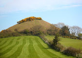 Grassy hill on a spring day — Stock Photo