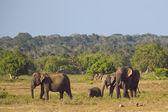 Słoń rodziny — Zdjęcie stockowe