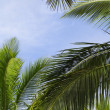 Palm fronds against a blue sky — Stock Photo