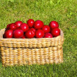 Basket of plums — Stock Photo #2808021