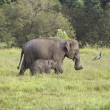 Stock Photo: Mother and baby elephant