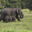 Stock Photo: Mother and baby elephant 2