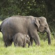 Stock Photo: Mother and baby elephant 3
