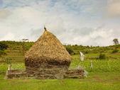 Rural india — Stock Photo