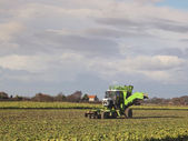 Sugarbeet harvester — Stock Photo