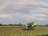 Sugarbeet harvester — Stock Photo