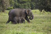 Mother and baby elephant 2 — Stock Photo