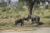 Two elephants in sri lanka 2 — Stock Photo