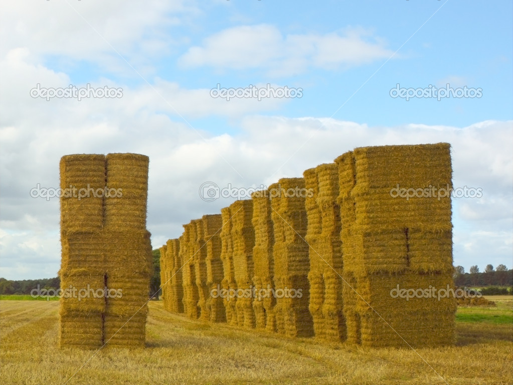 Stacks of big straw bales in summer — Stock Photo #2808052
