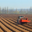 Preparing to sow carrots — Stock Photo