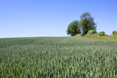 Hillside arable field — Stock Photo