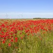 Poppy field with wind turbines - Stock Photo