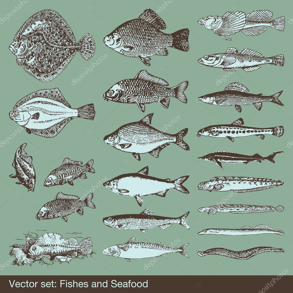 Fish vector set background for poster — Stock Vector #3615251