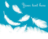 Feathers vector background — Vecteur