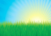Green grass, water and sun background vector — Stock Vector