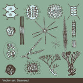 Alga and amoeba organism background set vector — Stock Vector